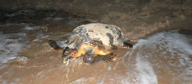 Kosi Bay Turtle Tours
