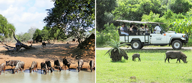 Mkuze game reserve, Dinizulu Safaris, safari company, Hluhluwe, Dumazulu Cultural Village, cottage, self catering, accommodation, game drives, tours